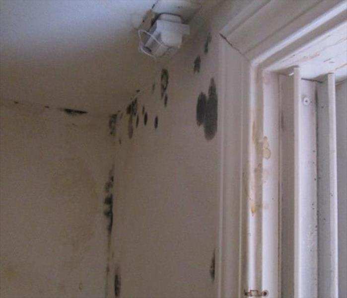 Mold Attack in a New Orleans Property