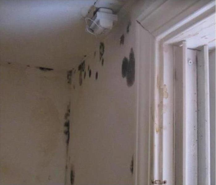 Mold on ceiling and wall by doorframe