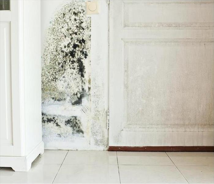 Mold on walls
